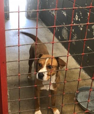 Portales Animal Shelter - The Roosevelt Review